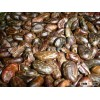 Quality Roasted Cocoa Beans Available