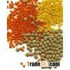 Canadian lentils for export