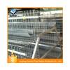 agriculture farming breeder equipement broiler chicken raisi